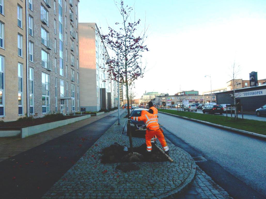 träd_alle